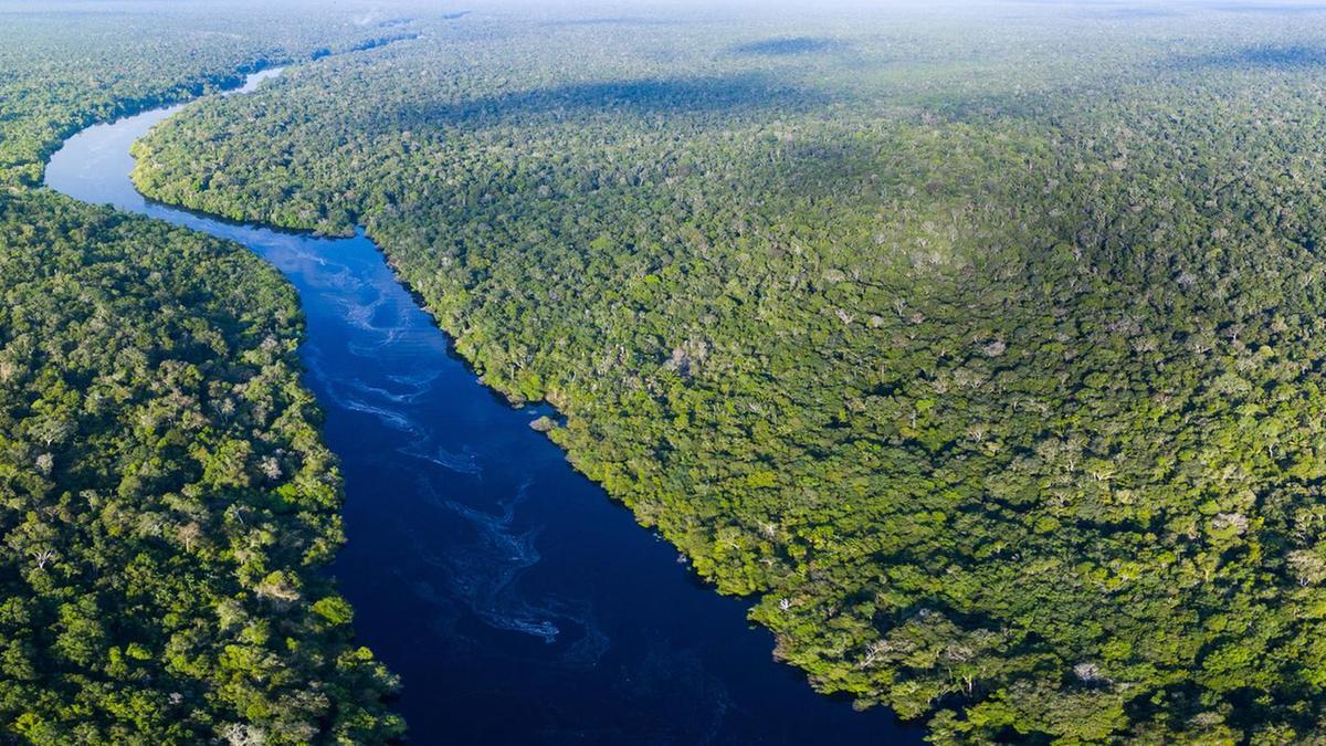 Global Forest Bond